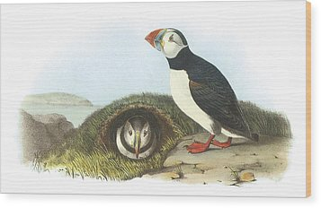 Atlantic Puffin Wood Print by John James Audubon