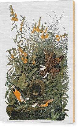 Audubon: Meadowlark Wood Print by Granger