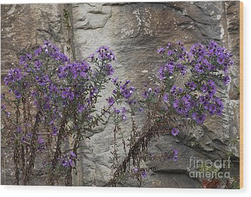Autumn Asters Wood Print by Randy Bodkins
