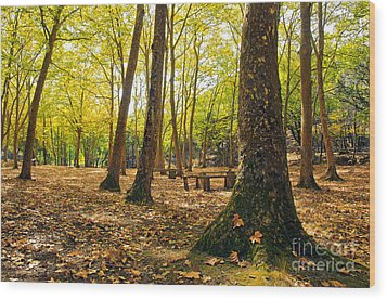 Autumn Scenery Wood Print by Carlos Caetano