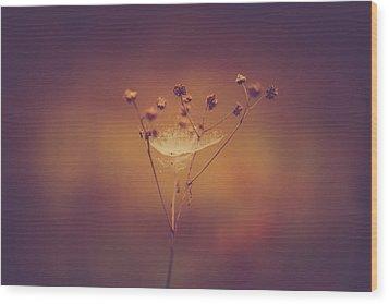 Autumn Web Wood Print by Shane Holsclaw