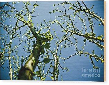 Baby Spring Tree Leaves 02 Wood Print by Ryan Kelly