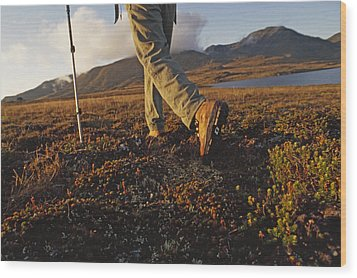 Backpacker Hikes Across Tundra In Logan Wood Print by Gordon Wiltsie