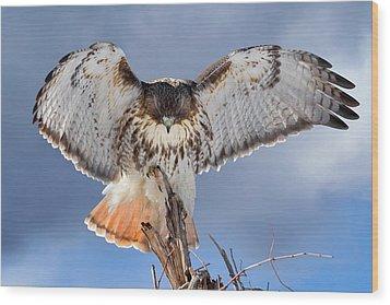 Balance Wood Print by Bill Wakeley