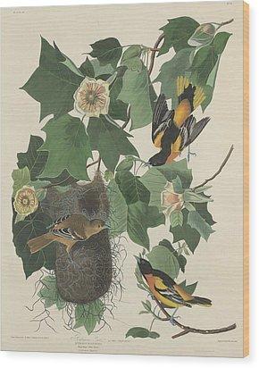 Baltimore Oriole Wood Print by John James Audubon