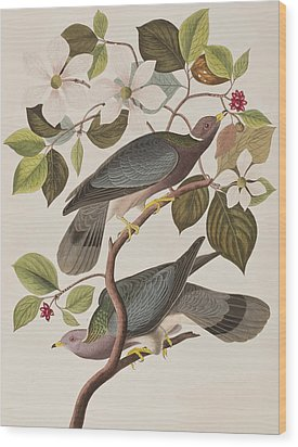 Band-tailed Pigeon  Wood Print by John James Audubon