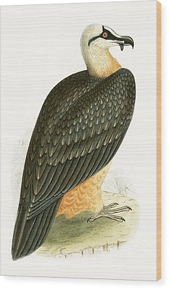 Bearded Vulture Wood Print by English School