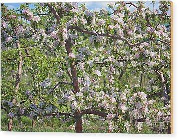Beautiful Blossoms - Digital Art Wood Print by Carol Groenen
