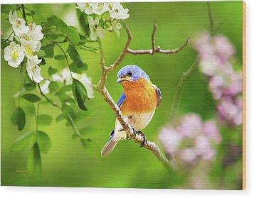 Beautiful Bluebird Wood Print by Christina Rollo