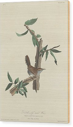 Bewick's Long-tailed Wren Wood Print by John James Audubon