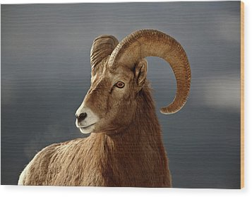 Bighorn Sheep In Winter Wood Print by Mark Duffy