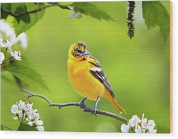 Bird And Blooms - Baltimore Oriole Wood Print by Christina Rollo