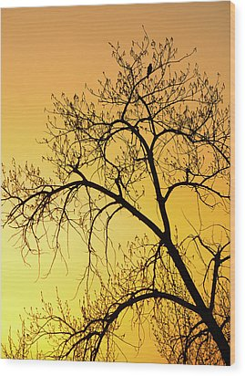 Bird At Sunset Wood Print by James Steele