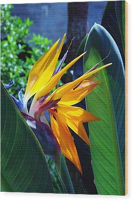 Bird Of Paradise Wood Print by Susanne Van Hulst