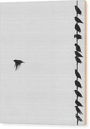 Birds On A Wire Wood Print by Jim Wright