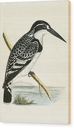 Black And White Kingfisher Wood Print by English School