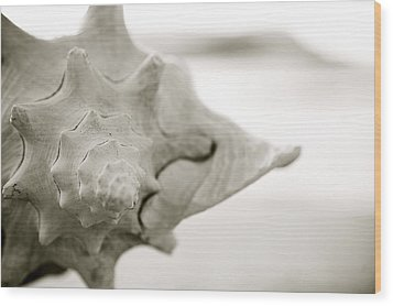 Black And White Seashell Wood Print by Kicka Witte - Printscapes