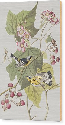 Black And Yellow Warblers Wood Print by John James Audubon