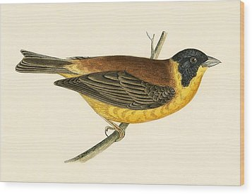 Black Headed Bunting Wood Print by English School