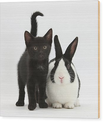 Black Kitten And Dutch Rabbit Wood Print by Mark Taylor