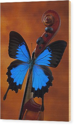 Blue Butterfly On Violin Wood Print by Garry Gay
