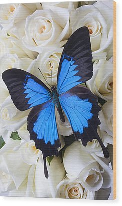 Blue Butterfly On White Roses Wood Print by Garry Gay