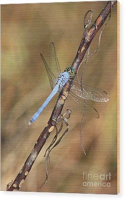 Blue Dragonfly Portrait Wood Print by Carol Groenen