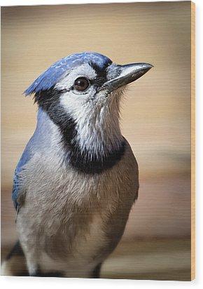 Blue Jay Portrait Wood Print by Al  Mueller