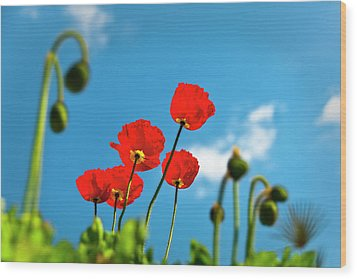 Blue Sky And Poppies Wood Print by Tamyra Ayles