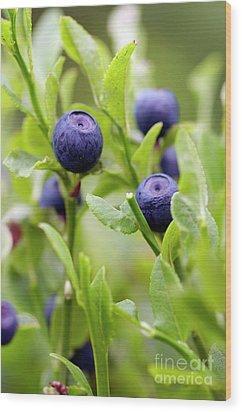 Blueberry Shrubs Wood Print by Michal Boubin