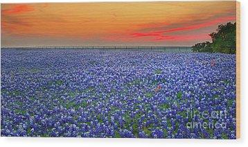 Bluebonnet Sunset Vista - Texas Landscape Wood Print by Jon Holiday