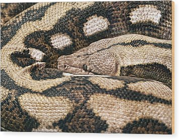 Boa Constrictor Wood Print by Tom Mc Nemar
