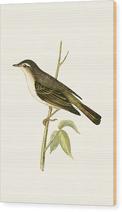 Bonelli's Warbler Wood Print by English School