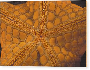 Bottom Of Orange Sea Star Or Starfish Wood Print by James Forte