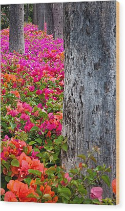 Bougainvillea Forever Wood Print by Eggers Photography