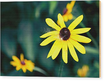 Brown Eyed Susan Wood Print by Jame Hayes