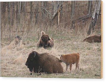 Buffalo And Calf Wood Print by Andrea Lawrence
