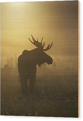 Bull Moose In Fog Wood Print by Tim Grams