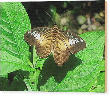 Butterfly Of Brown Wings On Green  Wood Print by Mario Perez