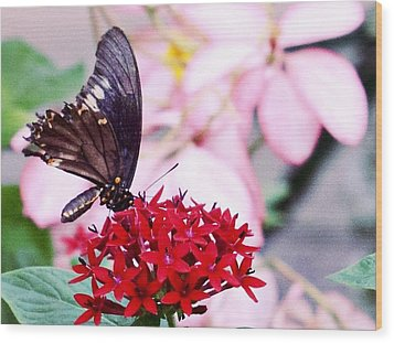 Black Butterfly On Red Flower Wood Print by Sandy Taylor