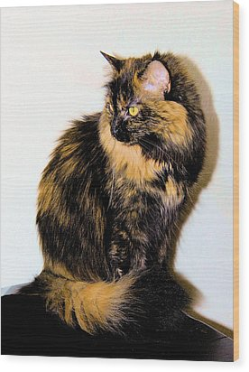 Calico Cats Wood Print by Cheryl Poland