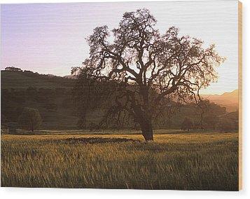 California Hwy 25 Oak Wood Print by Kathy Yates