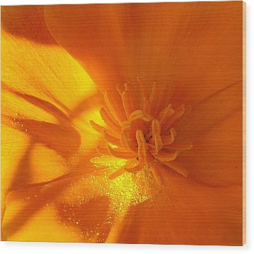 California Poppy Wood Print by Liz Vernand
