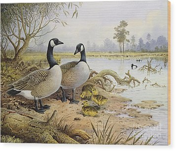 Canada Geese Wood Print by Carl Donner