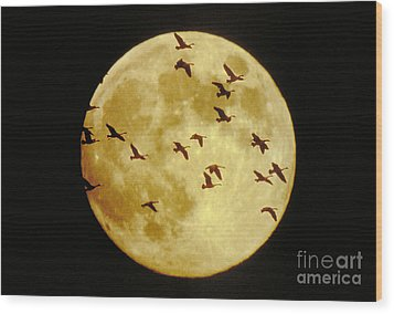 Canda Geese And Moon Wood Print by Kenneth Fink and Photo Researchers