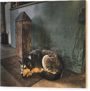 Canine Sentry Wood Print by Don Wolf