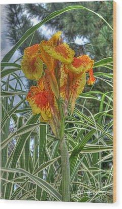Canna Lily Wood Print by David Bearden