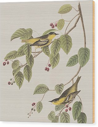 Carbonated Warbler Wood Print by John James Audubon