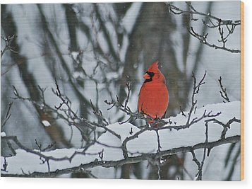 Cardinal And Snow Wood Print by Michael Peychich