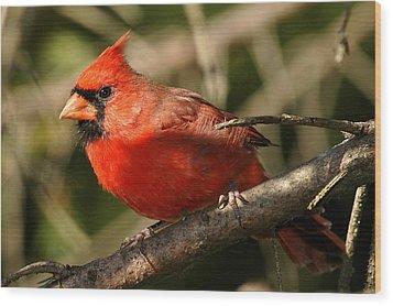 Cardinal Up Close Wood Print by Alan Lenk